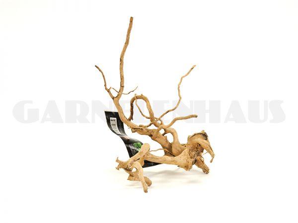 Spiderwood S, around 15-25 cm