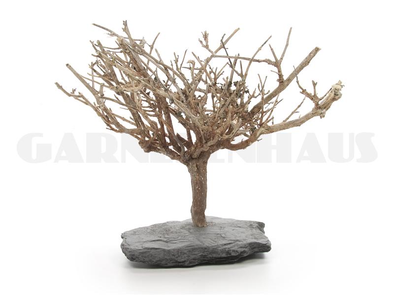 Nano Bonsai Tree L Garnelenhaus