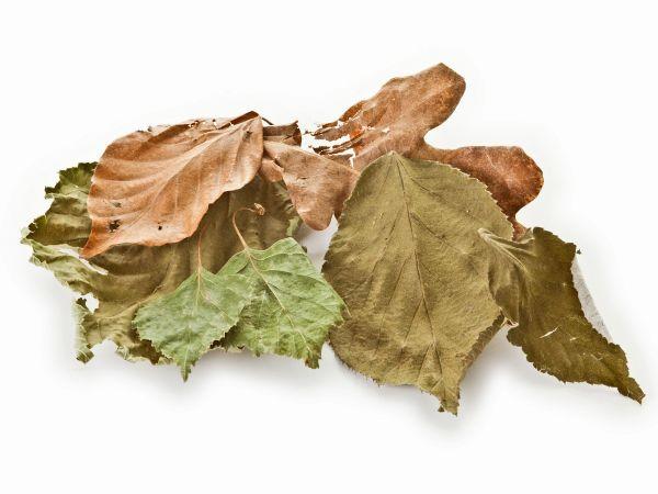 Set - 6-pack leaves mix