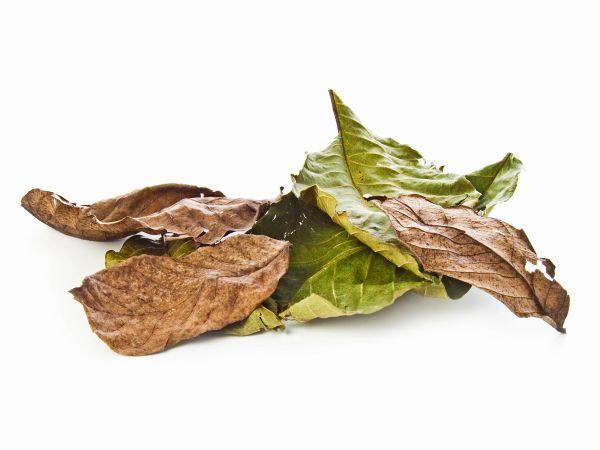 Walnut leaves, brown