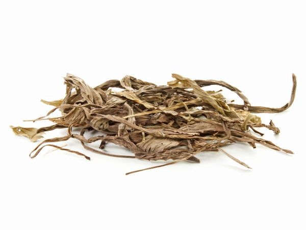 Ribwort plantain leaves and foliage