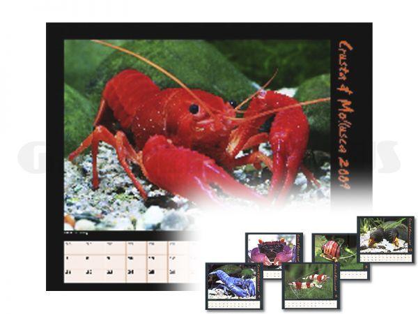 Crusta & Mollusca 2009 - calendar
