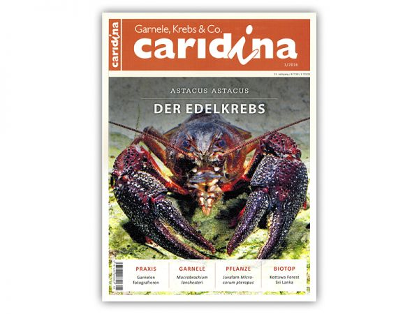 caridina, issue 1/2016, in German