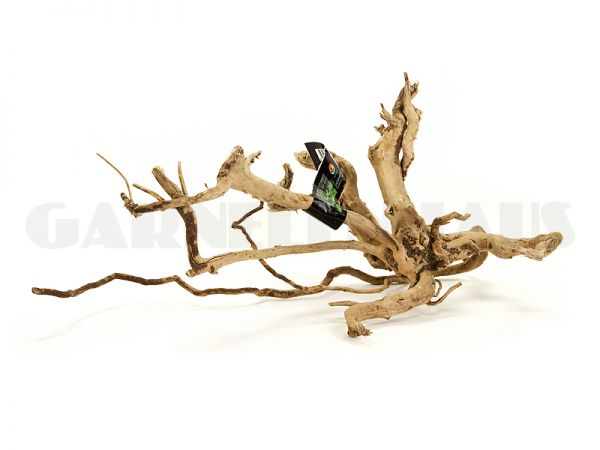 Spiderwood M, around 30-50 cm