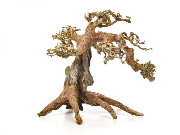 Dragon Tree S