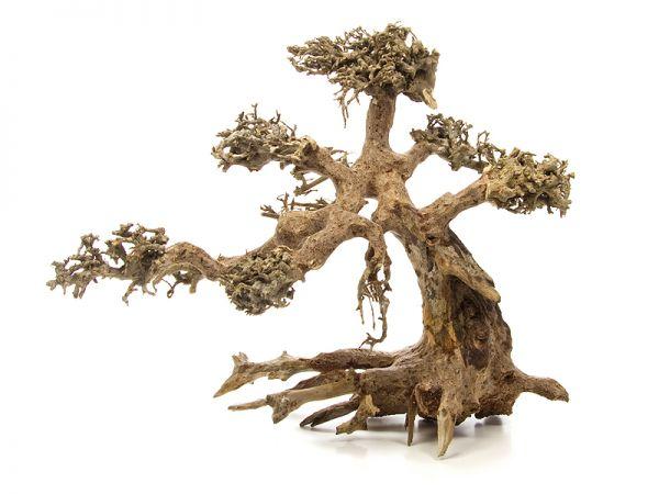 Dragon Tree M
